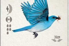 jeudice_matagot_wingspan_carte_3