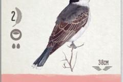jeudice_matagot_wingspan_carte_4