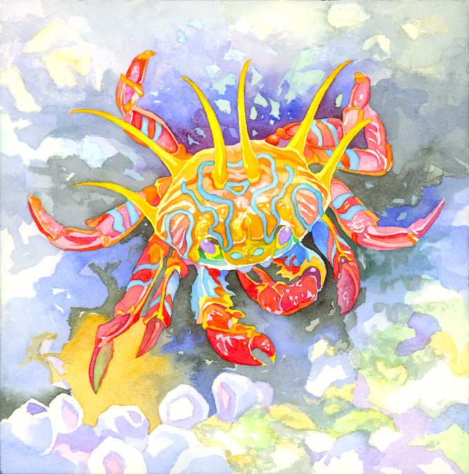Jeudice - FunForge - océans - Evolution